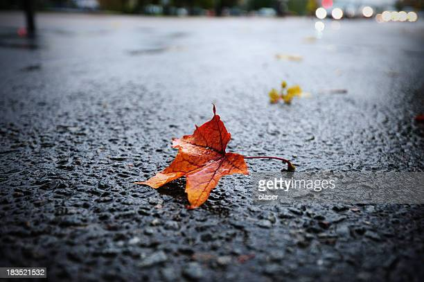 Sunlit rain wet autumn leaf on asphalt