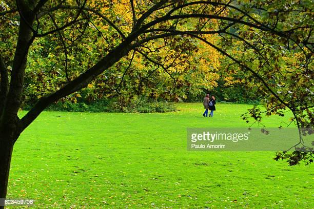 Sunny Autumn Day  in Amsterdam