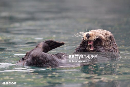 Sunny Cove Sea Otter : Stock Photo