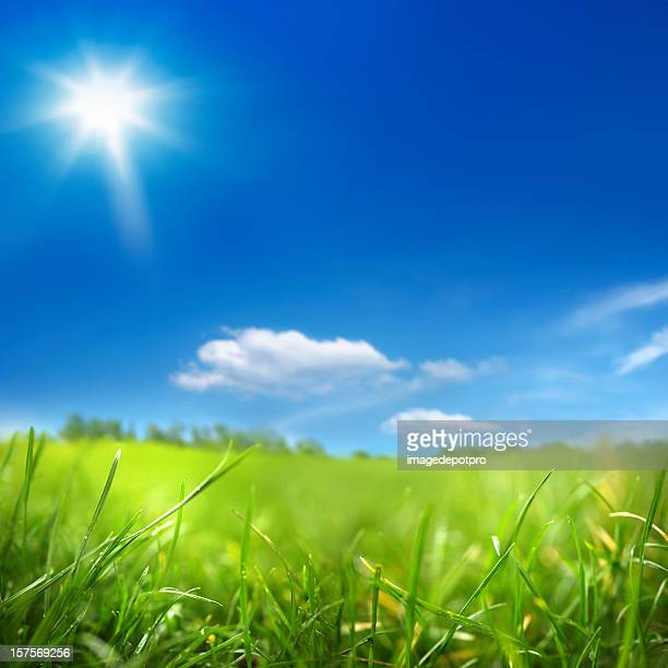 sunny day and green field