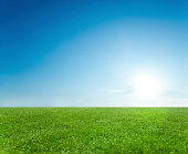 Clear blue sky over green field.