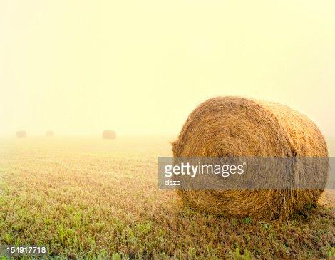 Sunny Foggy Morning Hayfield