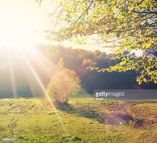 Sunny glade