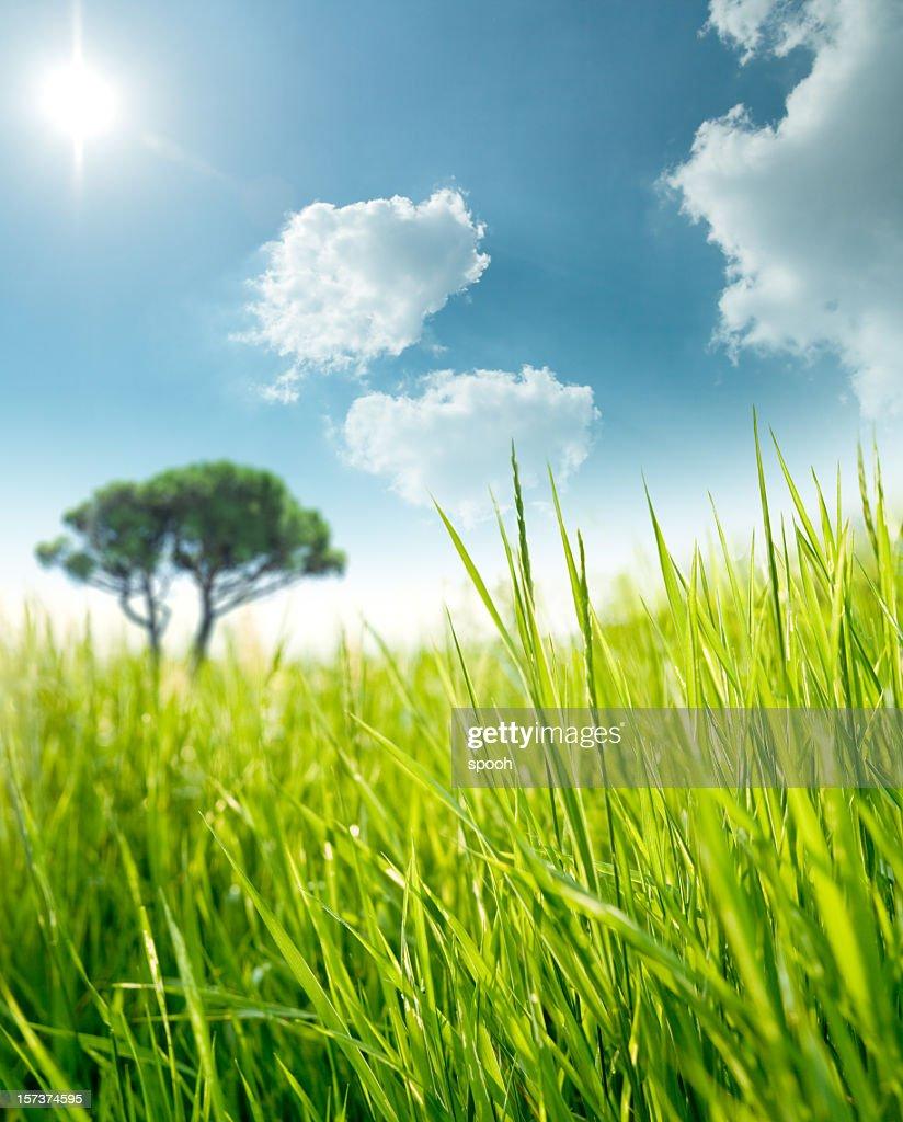 Sunny meadow : Stock Photo