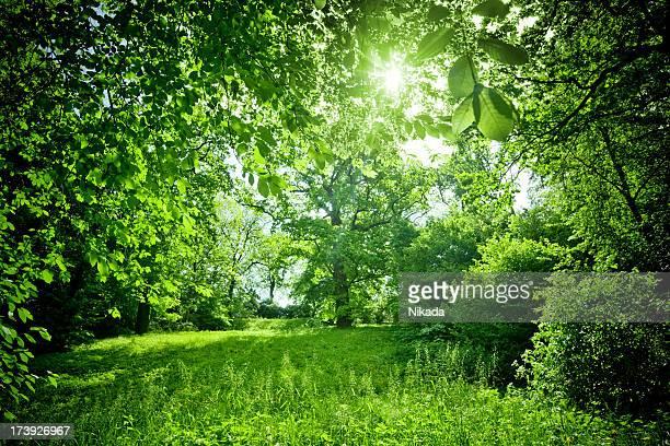 Sunny Nature