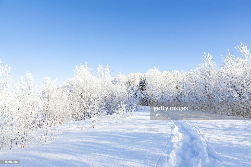 Dia de sol de inverno com Neve na floresta, Islândia : Foto de stock