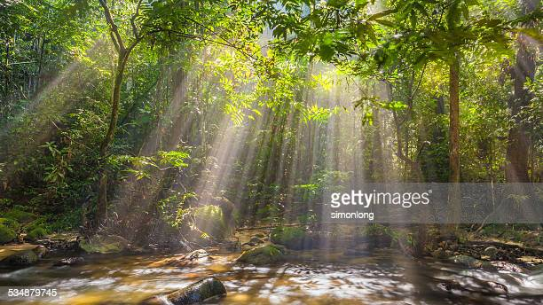 Sunrays in forest Malaysia
