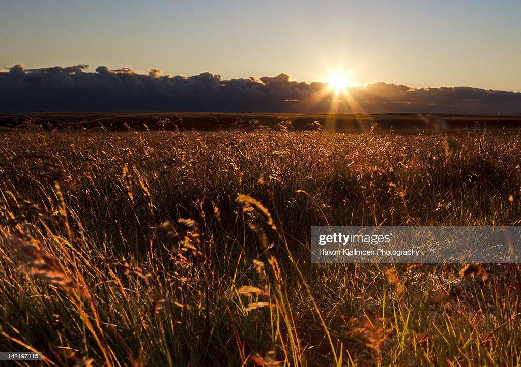 Sunrays over field : Stock Photo