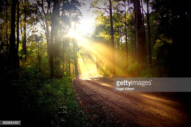 Sunrays through forest on country road