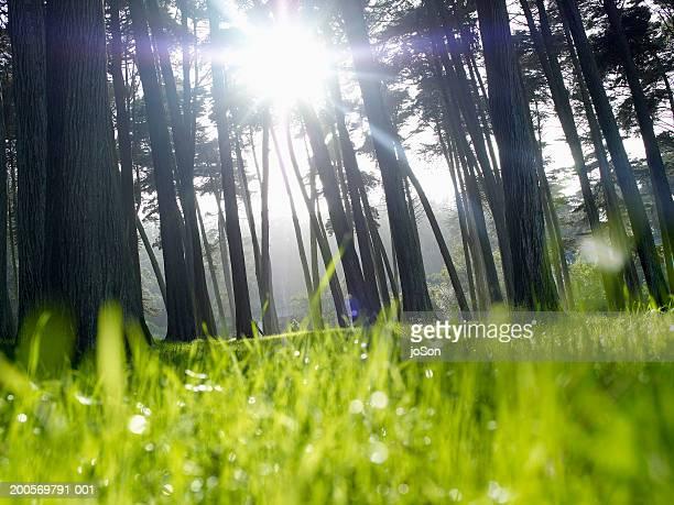 Sunrays through tree (focus on background)