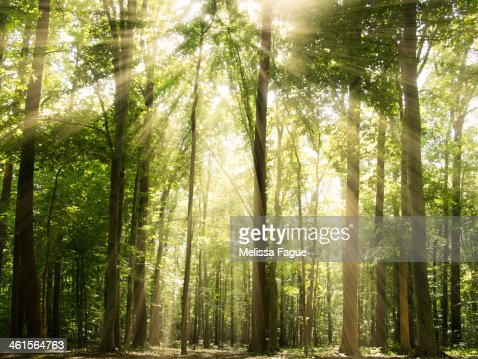 Sunrays Through Treetops
