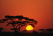 Sunrise and Acacia Trees