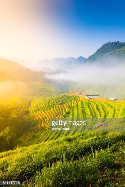 Sunrise and mist on mountain view at the north of thailand