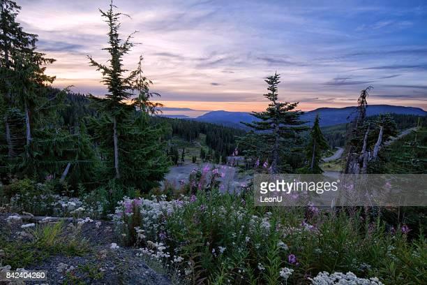 Lever du soleil au Mont Washington, l'île de Vancouver, BC, Canada