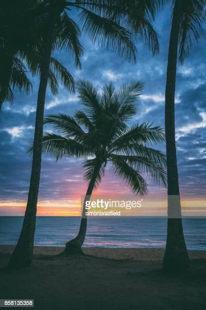 Sunrise At Palm Cove, Queensland, Australia