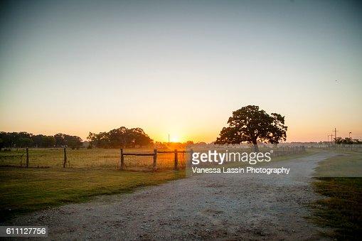 Sunrise at the Cowboys : Stock Photo