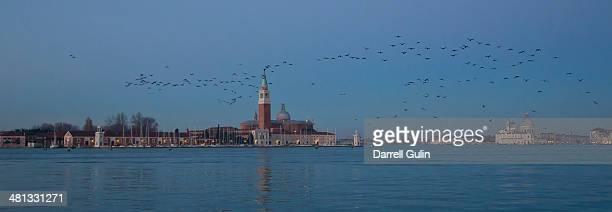 Sunrise, cormorants in flight, Venice