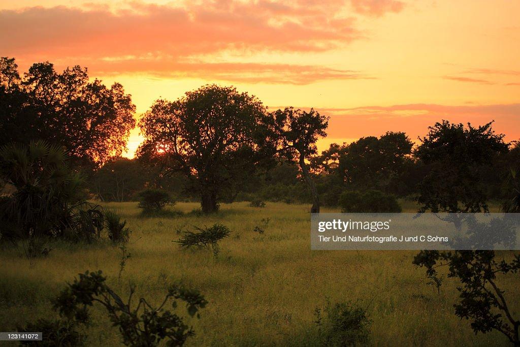 Sunrise in Kruger Nationalpark : Stock Photo