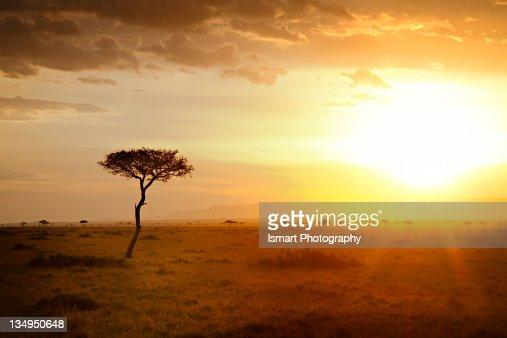 Sunrise in savannah