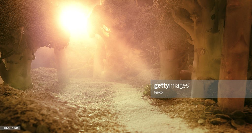 Sunrise in the forest of food : Stock Photo