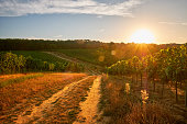 Sunrise in vineyard, South Moravian Region, Czech Republic