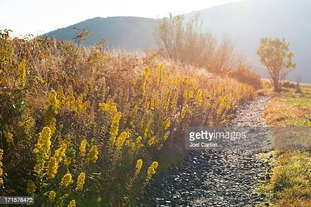 Sunrise on Appalachian Trail in the Roan Highlands