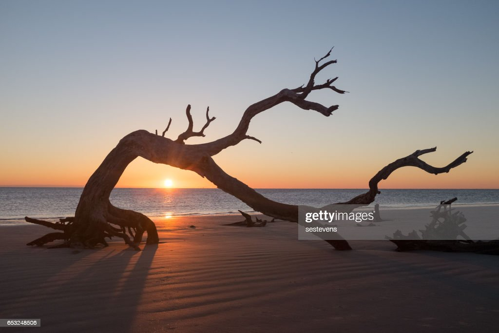 Sunrise on Jekyll Island Driftwood Beach : Stockfoto