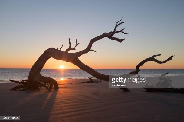 Sunrise on Jekyll Island Driftwood Beach