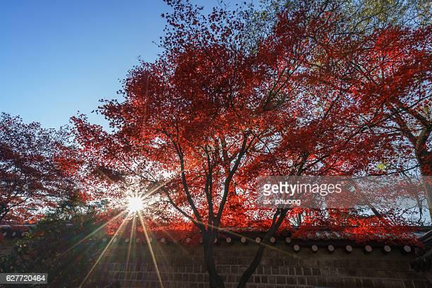 Sunrise on red leaf