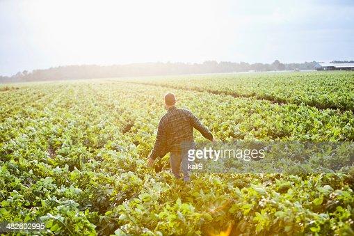 Lever du soleil sur le site de la ferme, homme travaillant au champ de culture