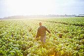 Sunrise on the farm, man working thru crop field