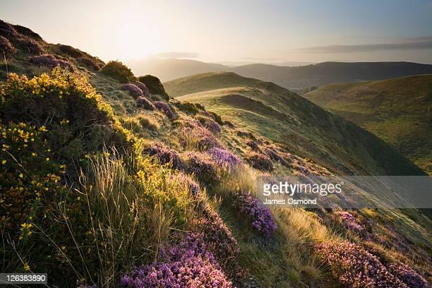 Sunrise on The Long Mynd, Shropshire, England, UK