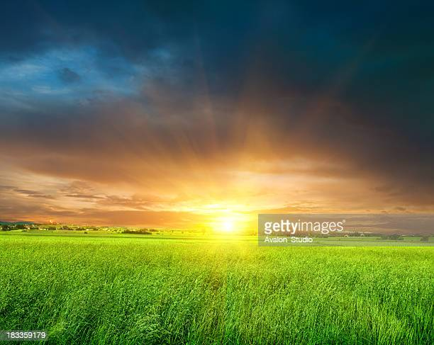 Sunrise on the meadow.