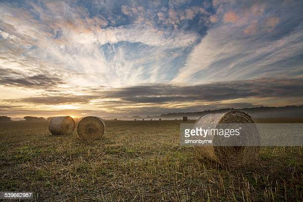 UK, England, Dorset, Sunrise in a field on Cranborne Chase,