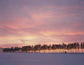Sunrise over a snow covered field in Hokkaido,  Japan