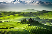 Sunrise over farm of olive groves and vineyards in  Tuscany.