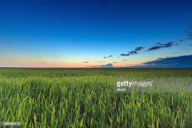 Sonnenaufgang über dem grünen Feld