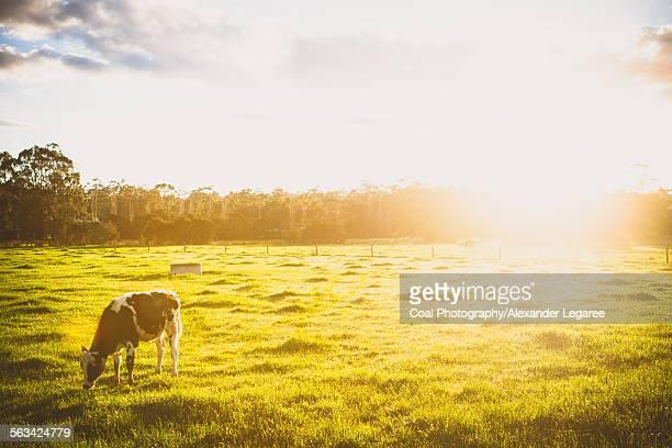Sunrise over organic farm