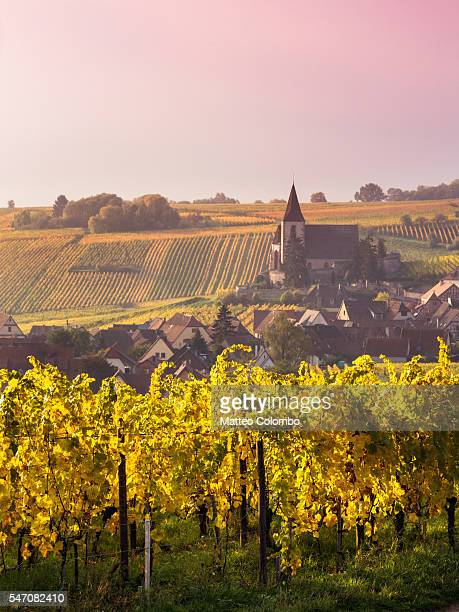 Sunrise over the vineyards in autumn, Alsace, France