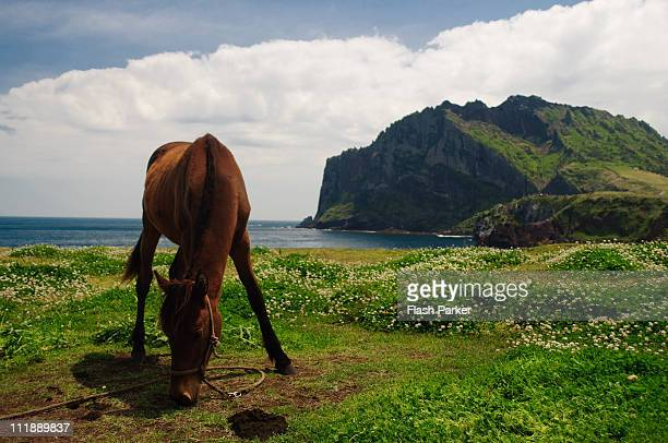 Sunrise Peak and a Jeju Stallion