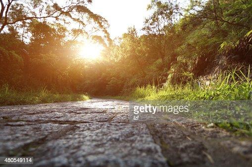 sunrise sendero en el bosque de piedra : Foto de stock