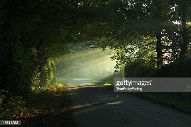 Sunrise through Autumn Trees
