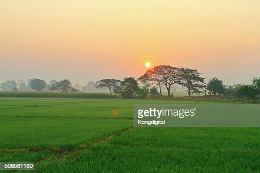 Sunrise tree fields. : Stock Photo