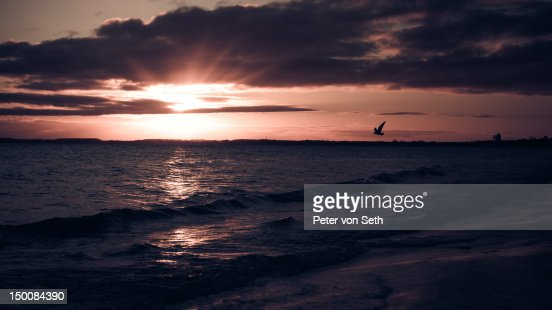Sunrise with flying bird at sea : Stock-Foto