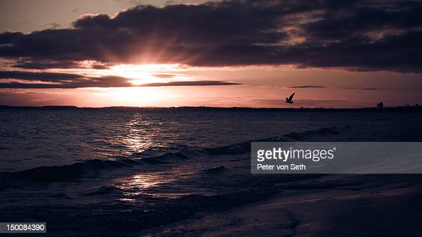 Sunrise with flying bird at sea