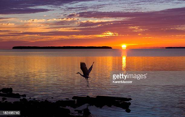 Sunrise with Heron