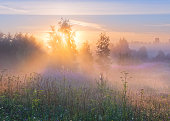Foggy summer morning in a field of idyllic landscape in soft pink and serenity tones.