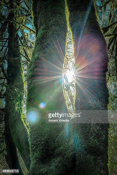 Sun's rays penetrate forest on summer's day
