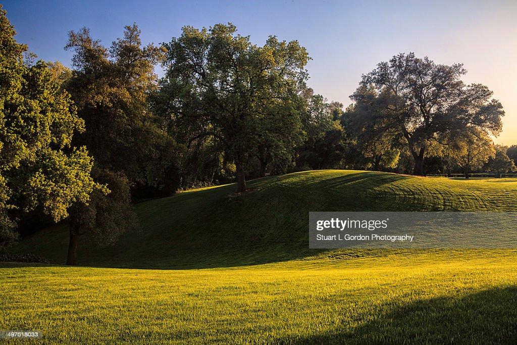 Sunset Among The Oaks
