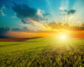 good sunset and green agriculture field